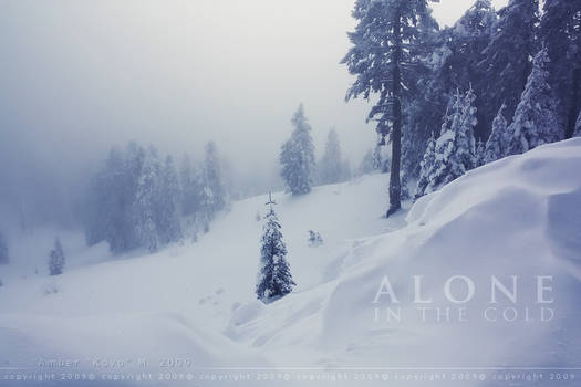 Alone In The Cold