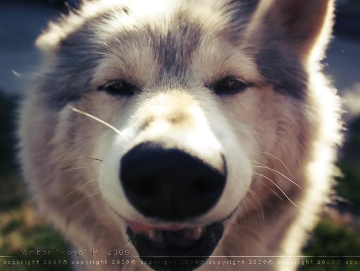 Spirit Smiles for You by KovoWolf