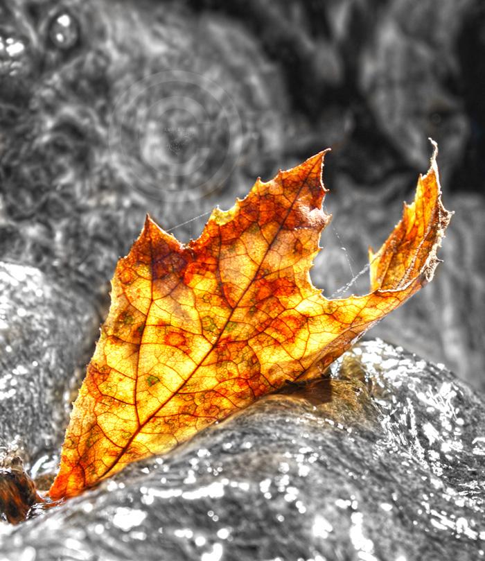Bright Autumn by KovoWolf