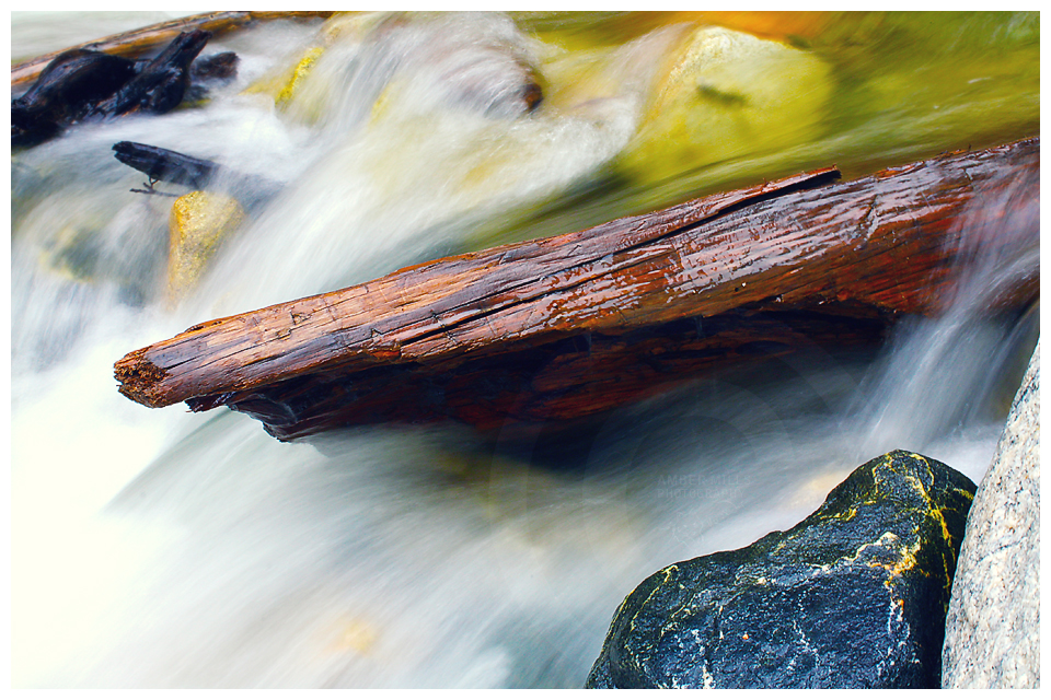 Log Bathed In Color by KovoWolf