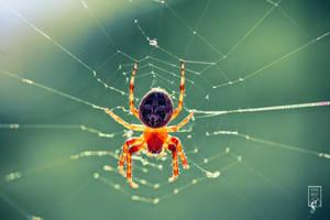 Golden Spider by KovoWolf