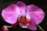 Orchid Week - 3