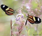Sharing nectar