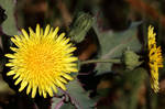 Flower in the bush
