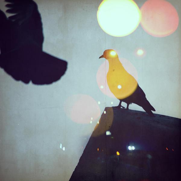 Soar by Image-heart