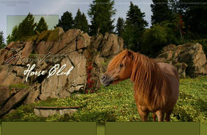 Miniature HorseClub by oceancoralgraphics