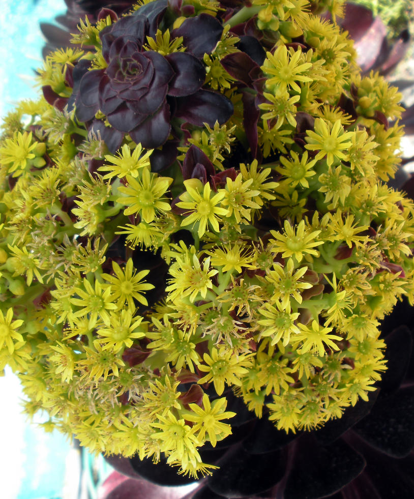 Ball Of Yellow Cactus Flowers By Fosspathei On Deviantart