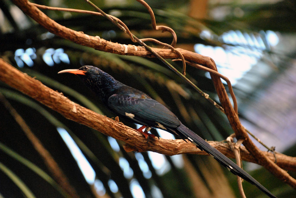 Green woodhoopoe by fosspathei