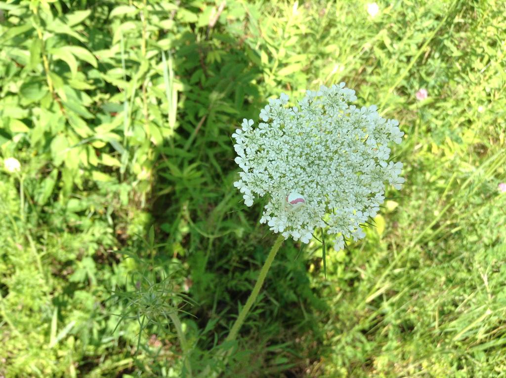 Last white flower by Arthur-Ericson