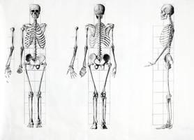 Human Anatomy Map by HerreVermeer