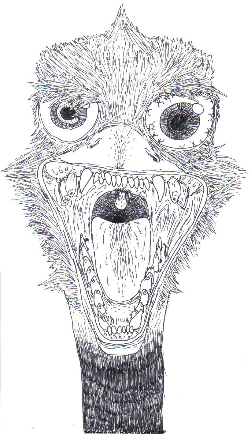 Ostrich Face Drawing Ostrich