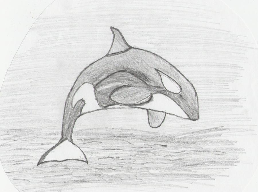 Killer Whale Drawing by jupiter008 on DeviantArt