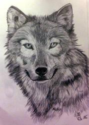 Wolf by LittleMissDevil1