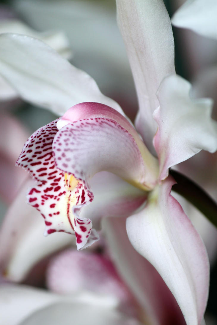 Orchid Side View by CASPER1830