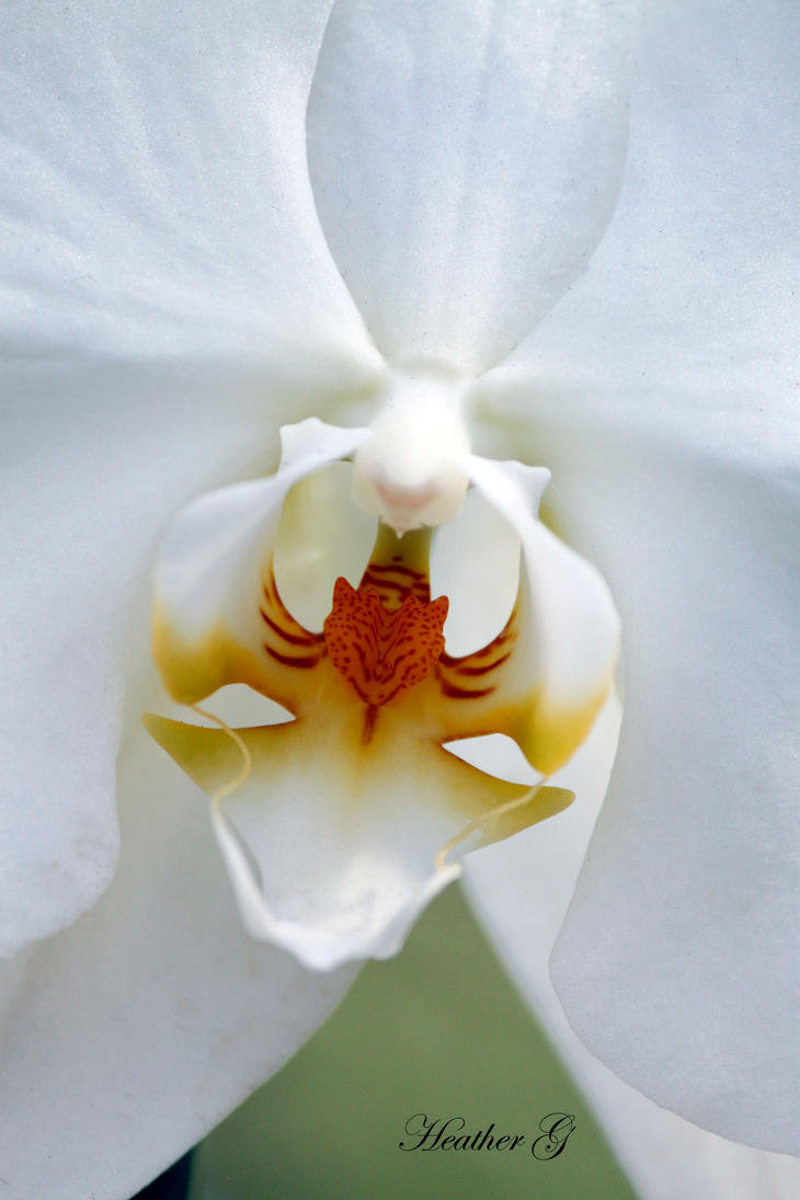 White Orchid by CASPER1830