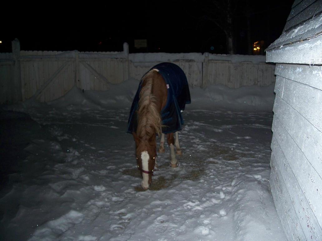 lost horse found its way in my backyard by maddoggyca on deviantart