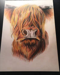 Highland Cow by Lauren180