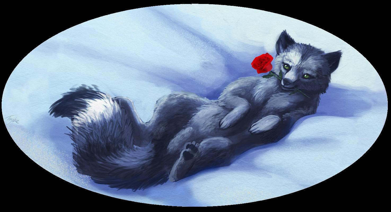Dark Arctic Fox