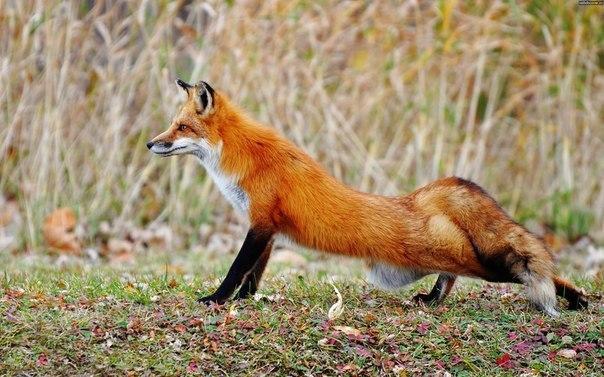 rVbWa73 OsQ by Dark-Arctic-Fox