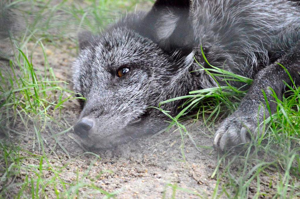 14979256821 4abbe9e278 O by Dark-Arctic-Fox