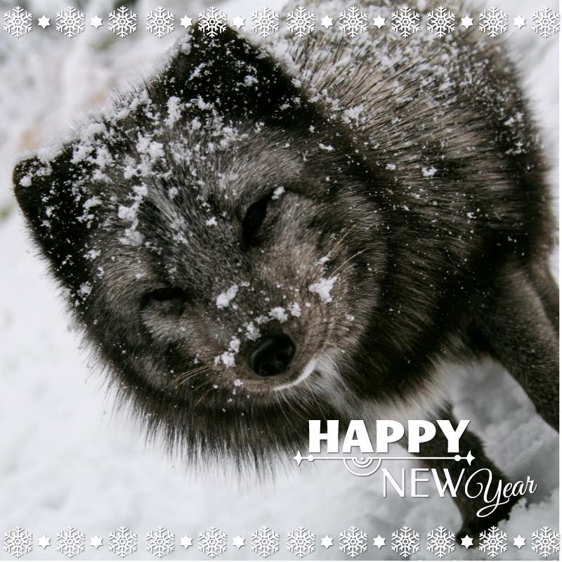 HAPPY NEW 2015 YEAR! by Dark-Arctic-Fox