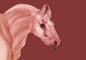 horsehorsehorse by GRIM-GIT