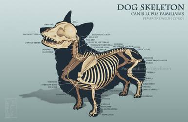 Corgi Skeleton by Faye-Fox