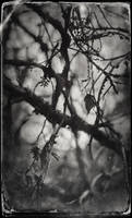 Branch by ditchcock