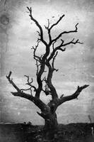 Tree by ditchcock