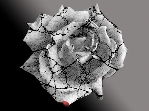 Cracked Rose by kmecreations on DeviantArt