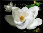 White Fragrance by 1Eres