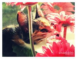 my little cat part 2 by wonderfulphoto