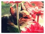 my little cat part 2