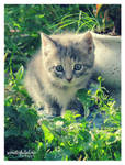 little meow 1 by wonderfulphoto