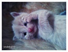 little meow 3 by wonderfulphoto