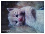 little meow 3