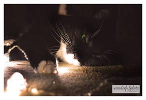 christmas kitty by wonderfulphoto