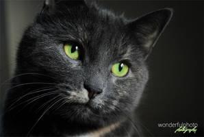 pretty kitty by wonderfulphoto