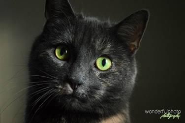 pretty kitty 2 by wonderfulphoto