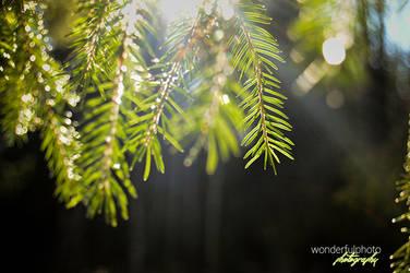 spring 1 by wonderfulphoto