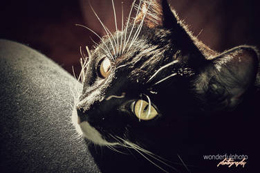 spring kitty by wonderfulphoto