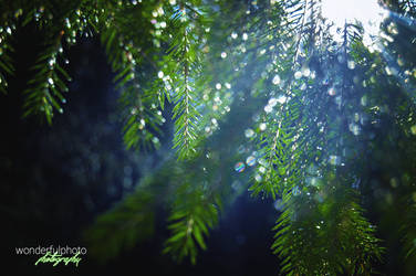 spring 3 by wonderfulphoto