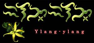 Ilang-ilang in Baybayin