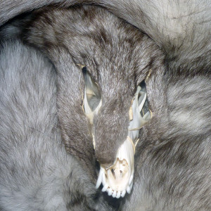 Tricksters-Taxidermy's Profile Picture
