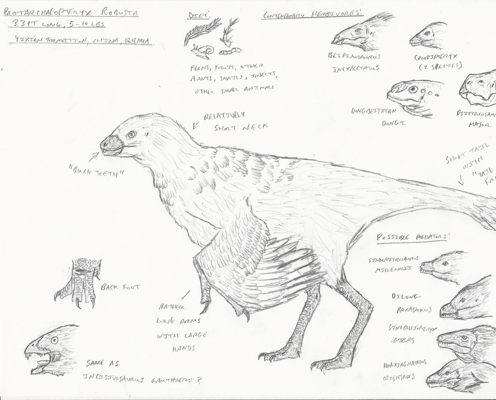 Protarchaeopteryx Infographic by RajaHarimau98
