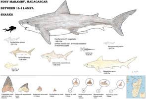 Nosy Makamby Sharks by RajaHarimau98