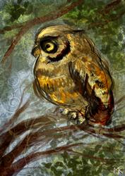 Owl by marchetooo