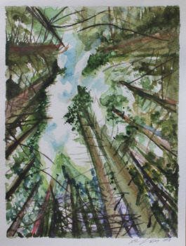 Forest Sky Watercolor