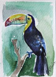 Toucan ACEO card