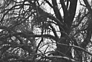 tree in my backyard by Lazyi-Photography
